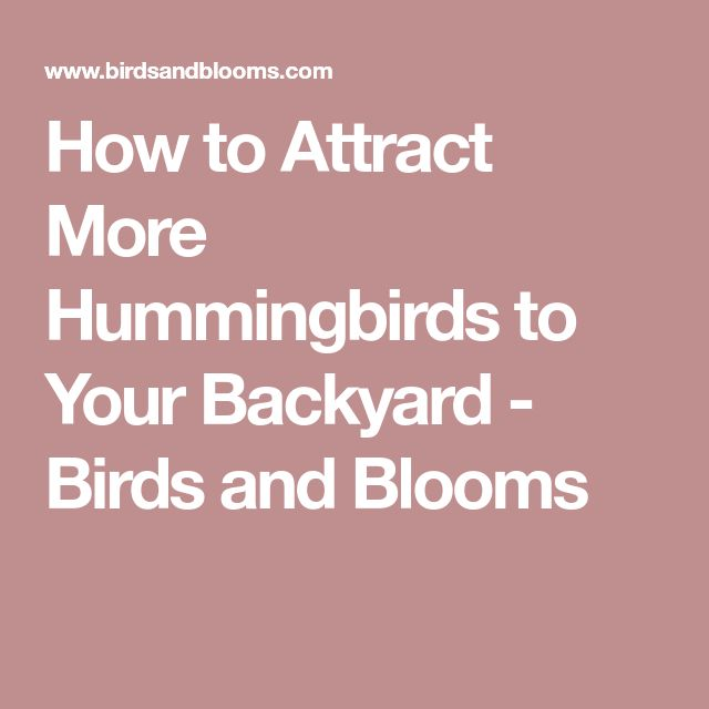 How To Attract More Hummingbirds To Your Backyard