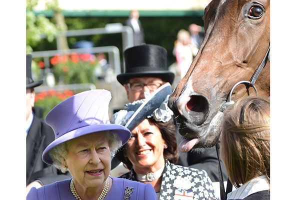 It's hard to steal the thunder from the Queen, but that horse is werking it, no doubt. Photo: Hugh Routledge/Rex/Rex USA.