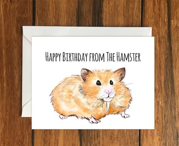 Happy Birthday Hamster One Blank Greeting Card And Envelope A6 Etsy Blank Greeting Cards Father S Day Greeting Cards Happy Fathers Day Greetings