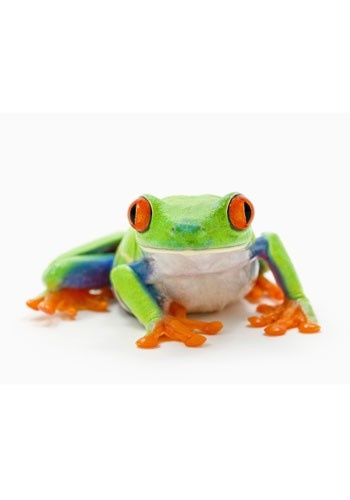 Frog In Throat Cure 36