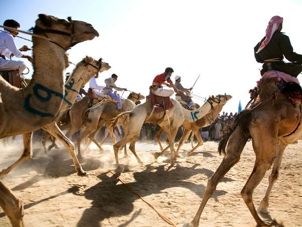 Camel races, Sinai Peninsula    by Graeme Fordham.        Young Bedouin boys race camels on Egypt's Sinai Peninsula. Tourism on Mount Sinai has been a boon to Bedouin, with some charging for camelback rides to the summit. Thousands of Bedouin live in the Sinai desert, where opportunities to earn cash are few.