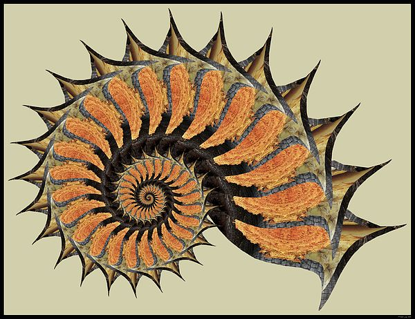 Bark Nautilus by MSB Lane: The varied colors of tree bark are celebrated in this classic nautilus-shaped fractal spiral.