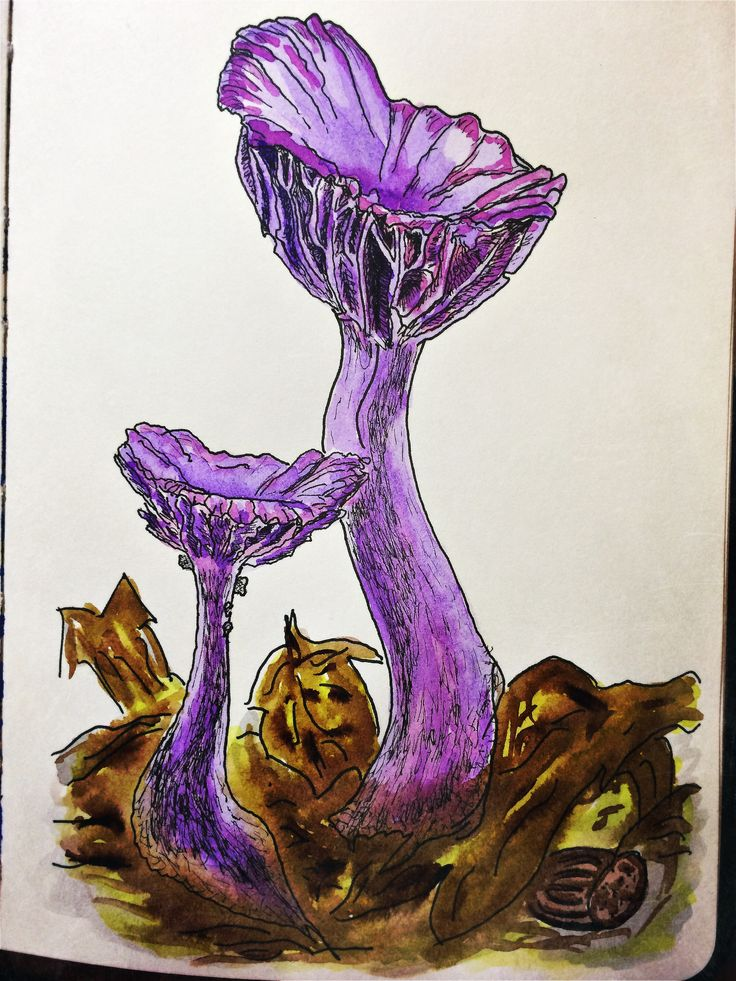 My mushrooms
