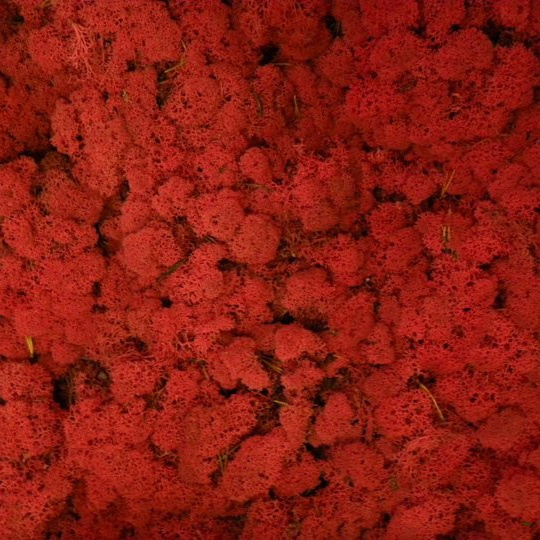 Verde Profilo MOSSdesign - Colours - RED PEPPER #verdeprofilo #mossdesign #moss #lichen #colours #redpepper #nuance