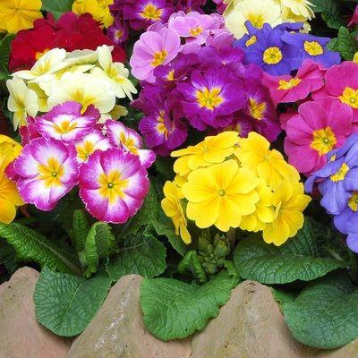 Site poze cu flori si plante pentru gradina imagini cu flori ornamentale pentru apartament ghiveci decoratiuni interioare pt casa ta buchete de trandafiri