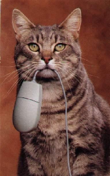 Kat vangt muis. Prooi mee van kantoor naar huis.