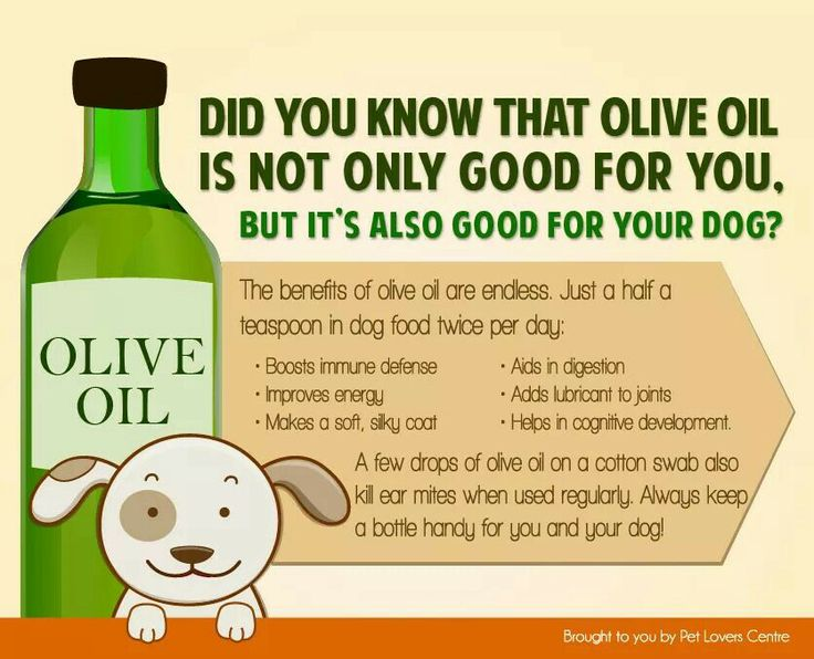 Can You Give Dogs Extra Virgin Olive Oil