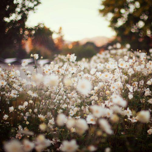 I love fields of flowers!