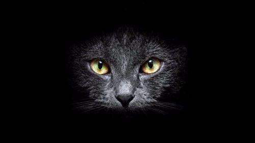 """QUESTA E' SICURO LA GIORNATA GIUSTA PER PARLARNE.... VOI AMANTI DEI GATTI VI RITROVATE NELLE NOTIZIE DI QUESTO ARTICOLO??   IL POTERE MISTERIOSO DEL GATTO  Tra i detti popolari, febbraio, veniva definito """"il mese dei gatti e delle streghe"""" collegando in tal modo gatti e magia. In effetti i felini, essendo animali veloci, indipendenti e furbi vengono da sempre considerati animali dai """"poteri mistici"""". Nell'antico Egitto, infatti, il gatto, legato alla dea Bastet, protettrice della famiglia e…"""