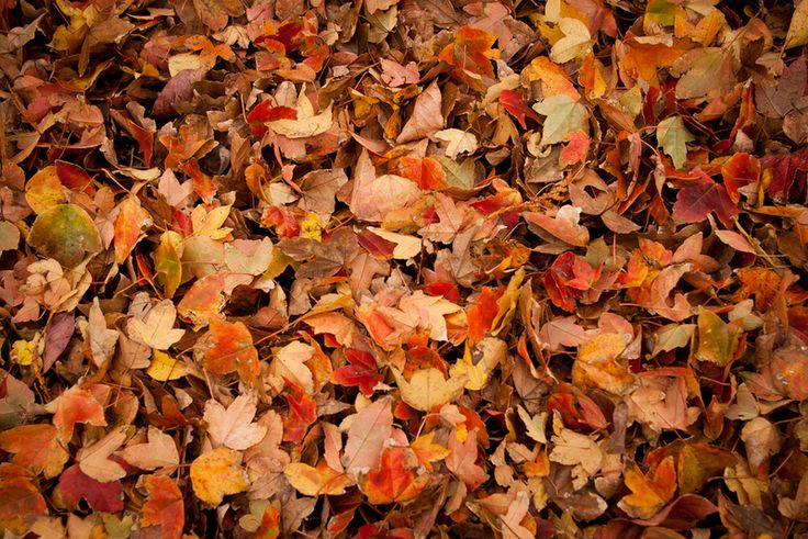 commercial flooring leaf pattern - Google Search