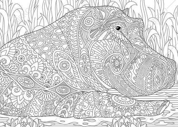 Hippo Hippopotamus Coloring Page. Adult by ColoringPageExpress
