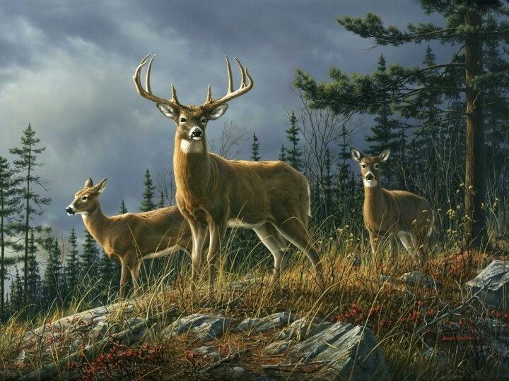 50 best yes we wood images on pinterest bookcases bowls for Deer mural wallpaper