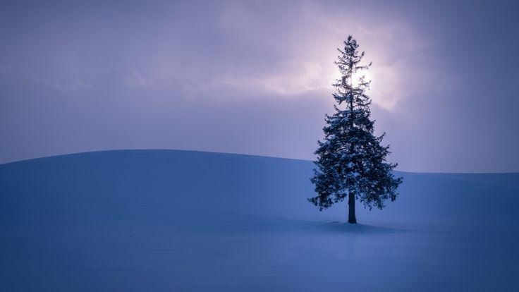 beautiful winter tree hd wallpapers download