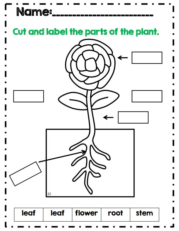 Parts Of A Plant Worksheet For First Grade on Printable Pictures Of Hibernating Animals