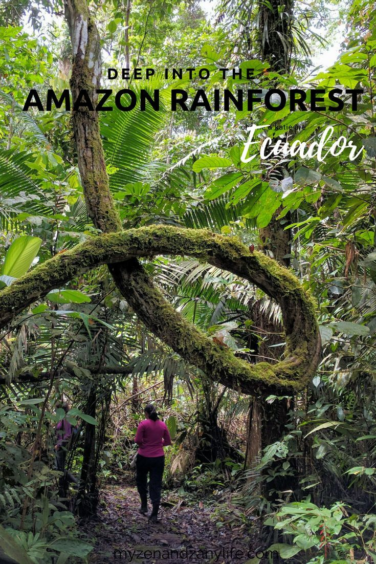 Amazon Rainforest In Ecuador Deep In The Jungle South America