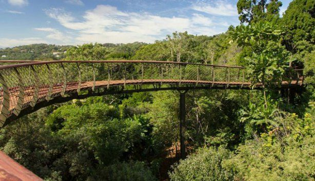 Aerial Boardwalk at Kirstenbosch