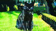 """New artwork for sale! - """" Cat Black Black Cat Animal Pet  by PixBreak Art """" - http://ift.tt/2mDHyxE"""