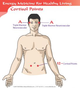 C. Cortisol Points – Using the 3-Finger Notch described above, hold A – Triple Warmer Neurovascular on one side of temple and with the other hand hold #12 – Cortisol Points 1″ below and 1″ out from navel on both sides with thumb and middle finger for 3-5 minutes. Switch hands and repeat on other side.  An alternate version is to hold a 3-Finger notch at the #1 Thyroid Point (above) while simultaneously holding the Cortisol Points.