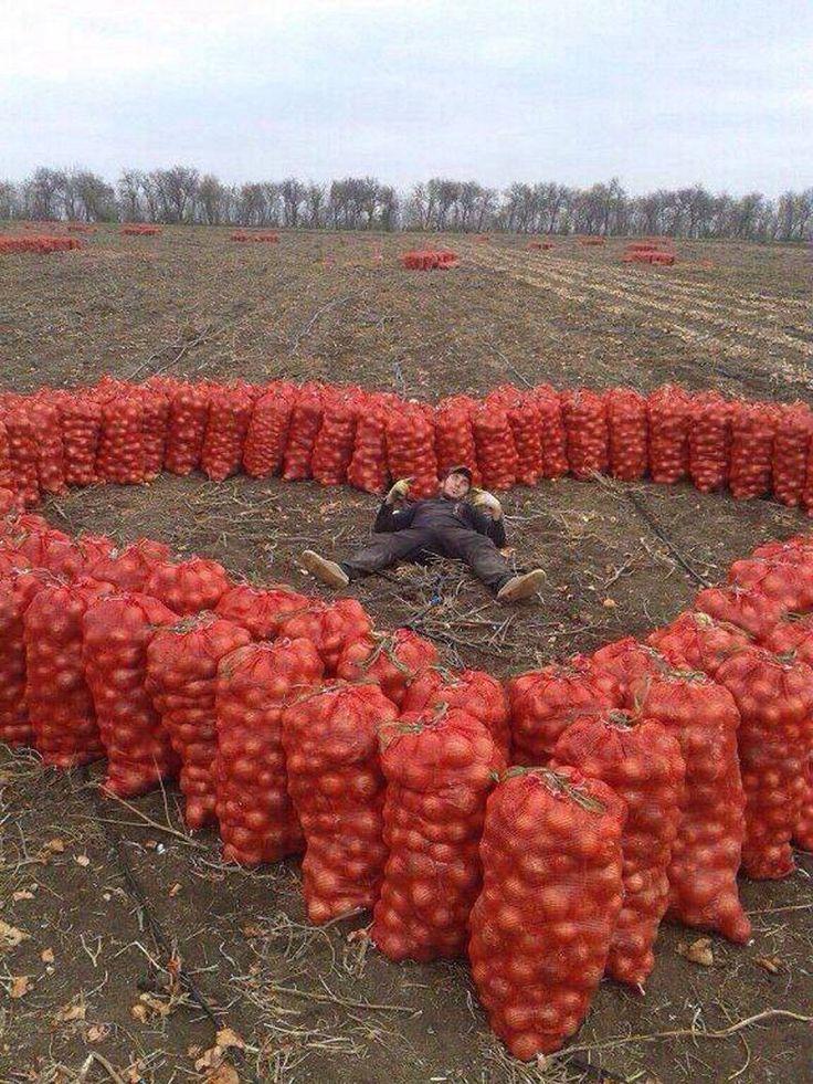 фрукте смешные фото для валентинки отличаются своих собратьев