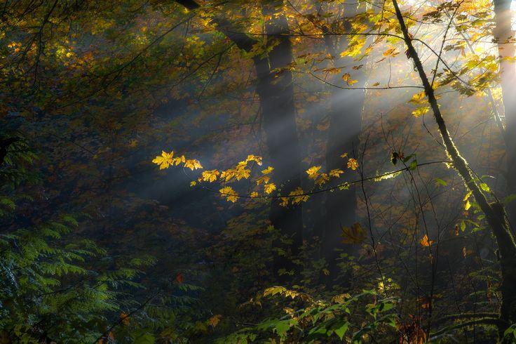 Fall Color in Puyallup WA USA [OC] [20001334]