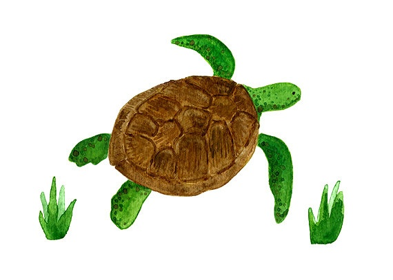 81 best aj's big boy turtle roomto be!!! images on pinterest
