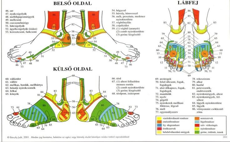 Talptérkép1  http://xenon.bibl.u-szeged.hu/~vidaa/holi/talp/talpika.pdf