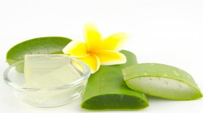 CONSUMING ALOE VERA CAN LOSE WEIGHT WITHOUT SIDE EFFECTS...  One way to lose weight without any side effects is to consume Aloe Vera. This plant is not only to lose the weight, but also it is good for healthy skin and hair...