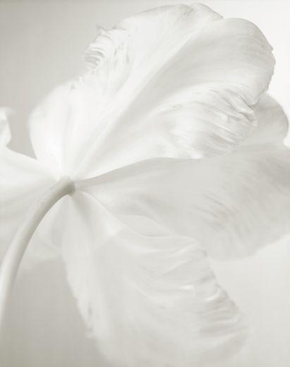 Photo Yumiko Izu, Secret garden - blanc 54