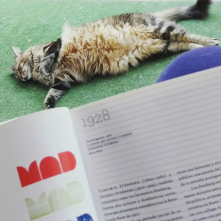 Pasiones...mi gato y el diseño