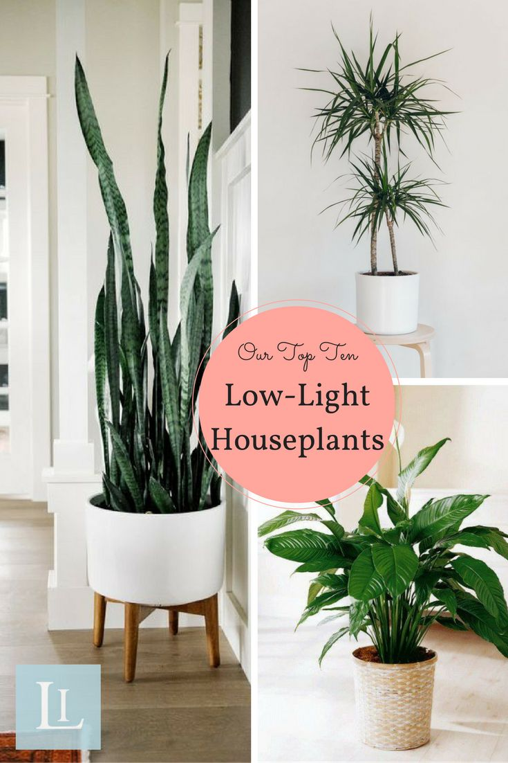 10 Houseplants That Donu0027t Need Sunlight. Low Light ...