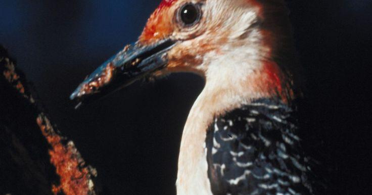 Productos caseros para el control de las aves. El sonido de los pájaros piando fuera es un sonido agradable para la mayoría de la gente, pero en algunas situaciones las aves pueden convertirse en plagas. Un ruidoso pájaro carpintero o una lechuza pueden impedirte dormir una noche completa, es posible que las aves golpeen las ventanas o hagan demasiados desperdicios en tu casa y en tu ...