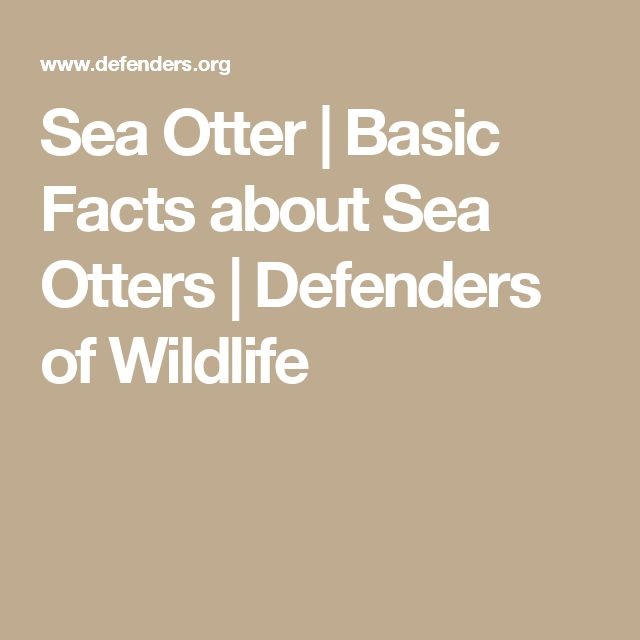 Sea Otter | Basic Facts about Sea Otters | Defenders of Wildlife