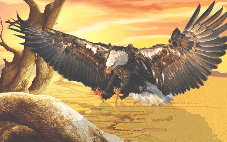 Águia - Eagle