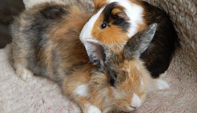 Kaninchen Mit Anderen Haustieren Halten Zooroyal Magazin Haustier Dobermann Hunde Kleine Tiere