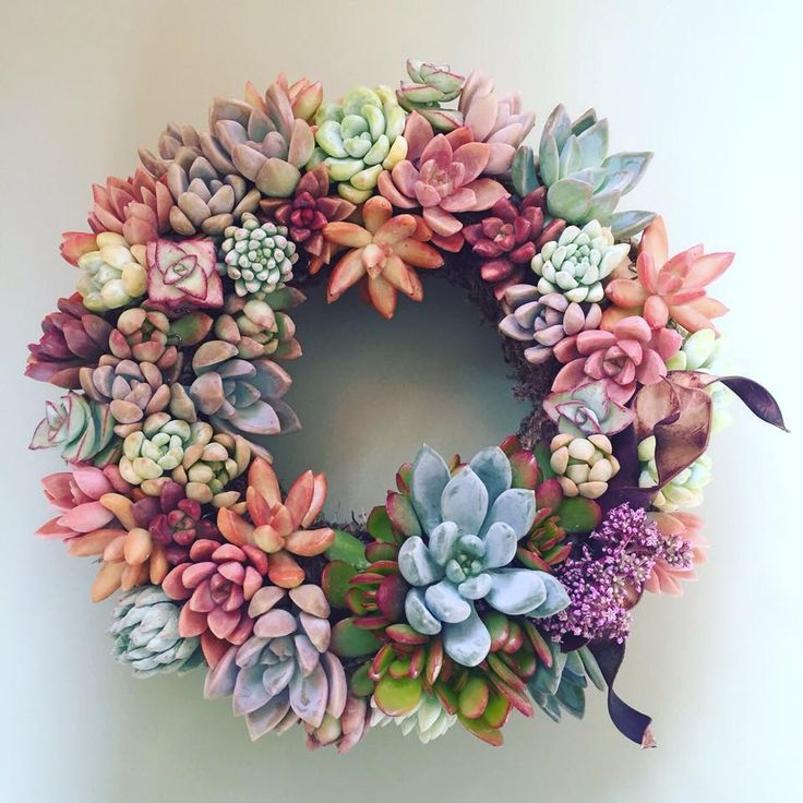 Colorful succulent wreath by Chicweed Patio & Garden