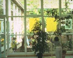 Rethinking early childhood classroom environments - article by Patricia Tarr
