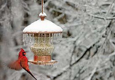 Feed Wild Birds Responsibly This Winter — Winter 2009 | Out Here Magazine