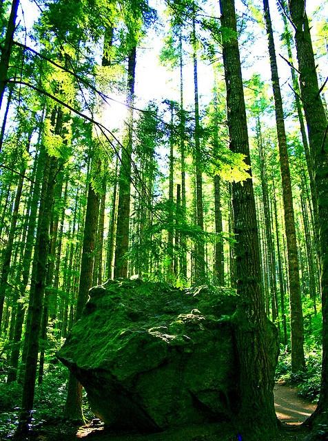 Forest, Washington State // photo by Andrew E. Larsen, 2007
