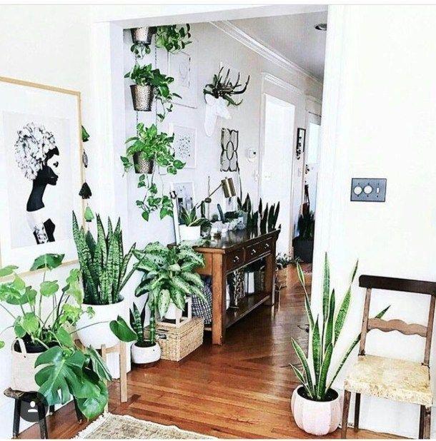 Stunning Indoor Decorative Plants To Bring Freshness Atmosphere 19 House Plants Indoor Interior Plants Plant Decor