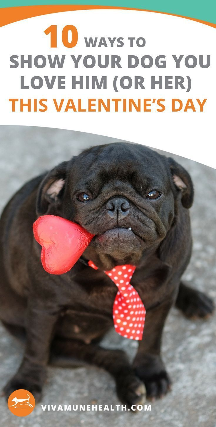 10 Ways To Show Your Dog Love This Valentine S Day Cheap Pet