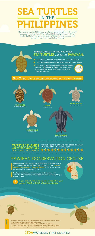 16 best turtle unit study images on pinterest sea turtles unit