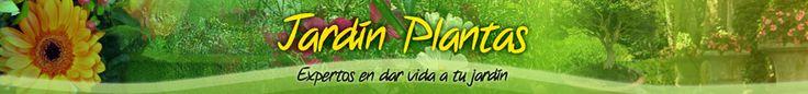 Cuidados de la planta crotos   La conocida como planta crotos pertenece a la familia de las Euforbiaceas y su nombre científico es Codiaeum. Es una planta muy decorativa que tiene su origen en Polinesia, Malasia e Indias orientales. Es muy habitual confundirla con otra planta llamada croton interior, del mismo género pero que no tiene ninguna especie decorativa sino que son todas medicinales.  Las hojas de esta planta son pecioladas, perennes, alternas y pueden tener formas diversas…