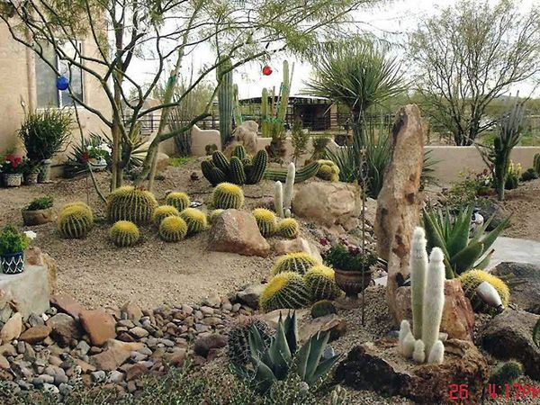 cactus desert landscaping designs ideas for small yards laurieflower