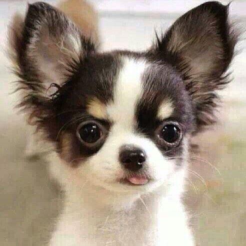 So stinkin' cute!