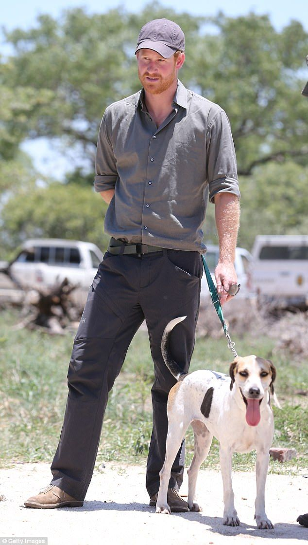 Prince Harry is pictured with a Ranger Tracker dog as he visits the South African Wildlife...