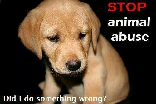 Animals deserve rights not abuse