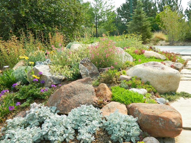 Fresh Drought tolerant Japanese Garden