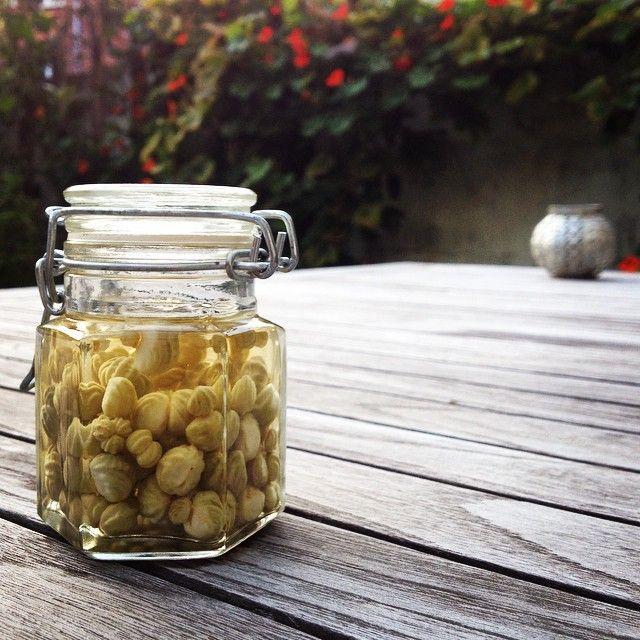Groene zaden van Oost Indische kers als kappertjes