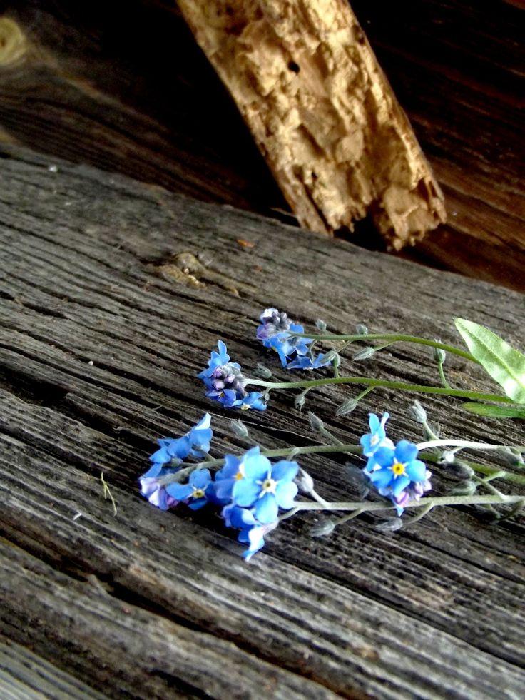 forgetmenots, flowers