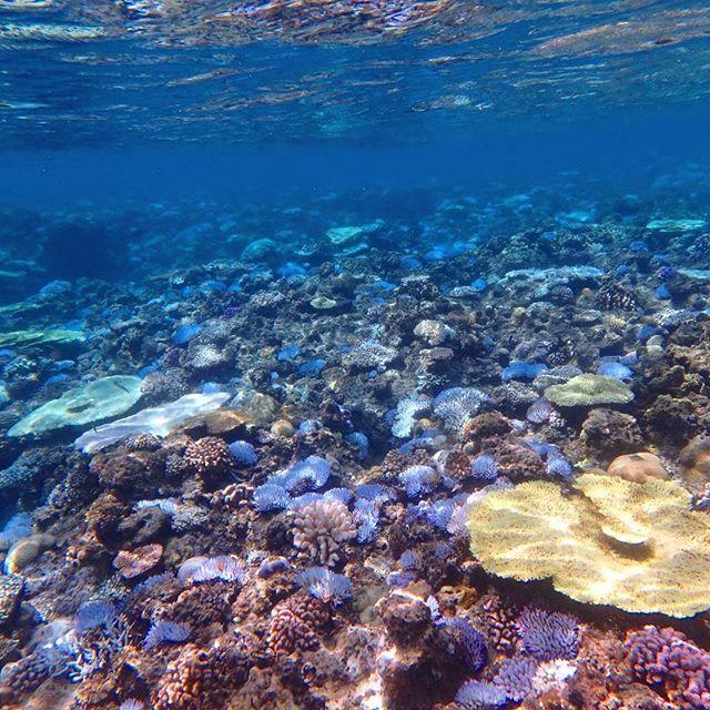 【tomoya.mermaid】さんのInstagramをピンしています。 《今回の台風はなかなかの威力⚡🌀☔ 直撃のような感じで、始めの予報よりは少し左にずれて、ちょっとはましだったかな✨ 珊瑚も今更だけど、お湯の中から解放されてることを信じて、明日からまた、水納島ツアー頑張りましょ🎵 定期船が出ればですけど✨ 夏も終わりに近づいて来たけど、沖縄の海遊びはまだまだ終わりませんよ✨ #japan #okinawa #minnajima #gopro #snorkel #diving #iloveokinawa #ilovebeach #沖縄 #沖縄旅行 #家族旅行 #沖縄行きたい #海 #美ら海水族館 #水族館 #離島 #水納島 #水納島マーメイド #シュノーケリング #シュノーケル #ウェイクボード #パラセーリング #ダイビング #ゴープロ #ビーチ #マリンスタッフ #マリンスタッフ募集#沖縄の海遊び #自分を信じる #人は簡単には変われない》